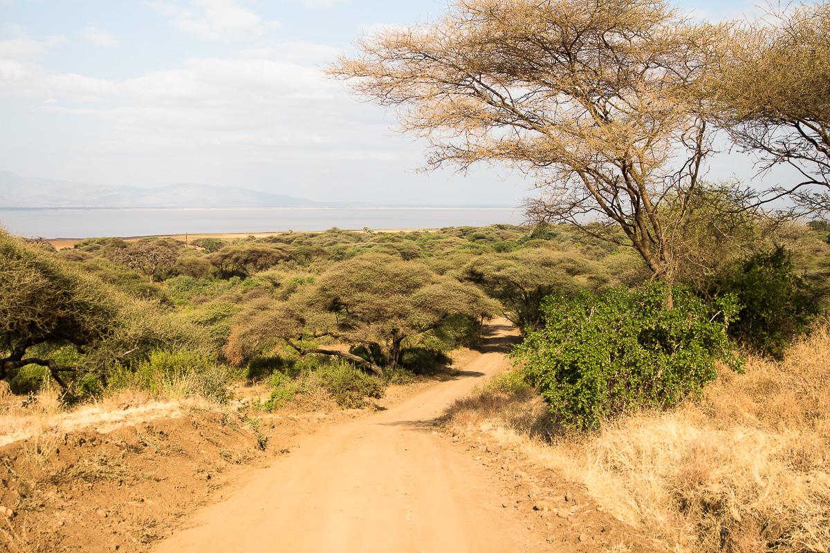 Lake Manyara road