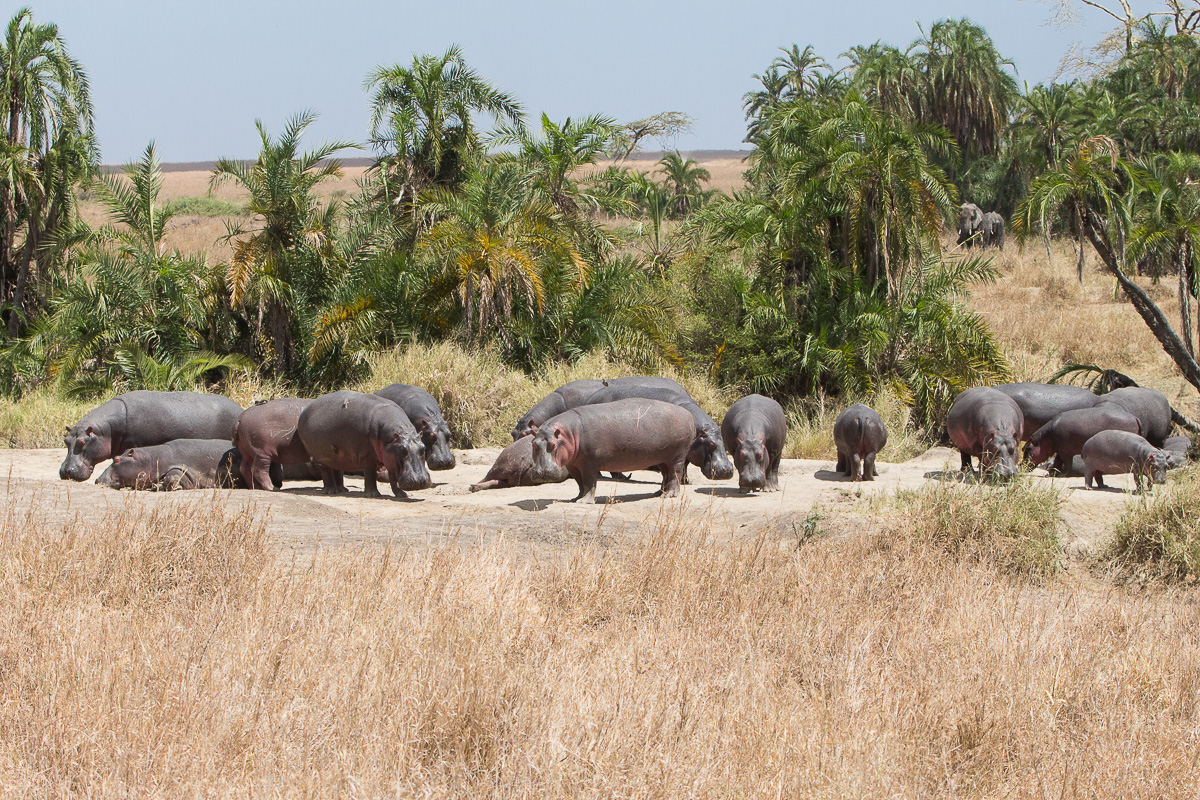Hippo city