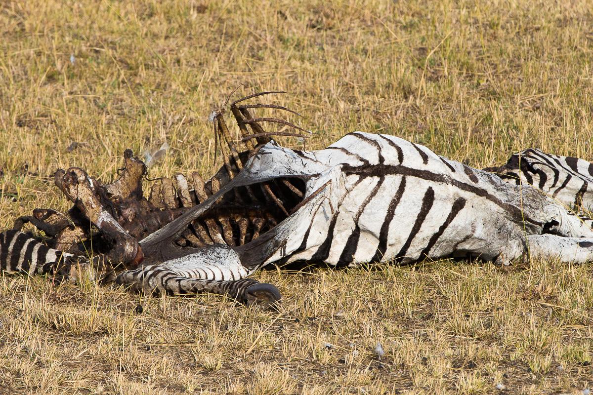 Dead Zebra